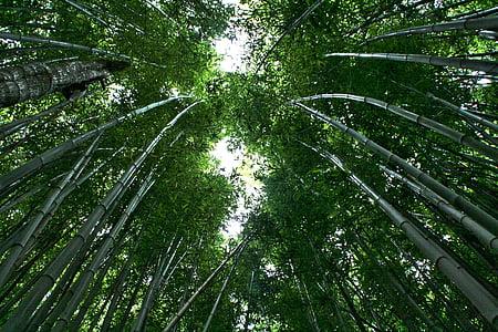 bambus, bambusové lesy, Bambus rastlín, tropických lesov, listy, Forest, stromy