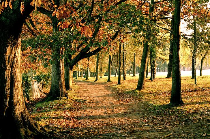 Nantes, jeseň, Forest, stromy, jesenný deň, jesenného lesa, Príroda