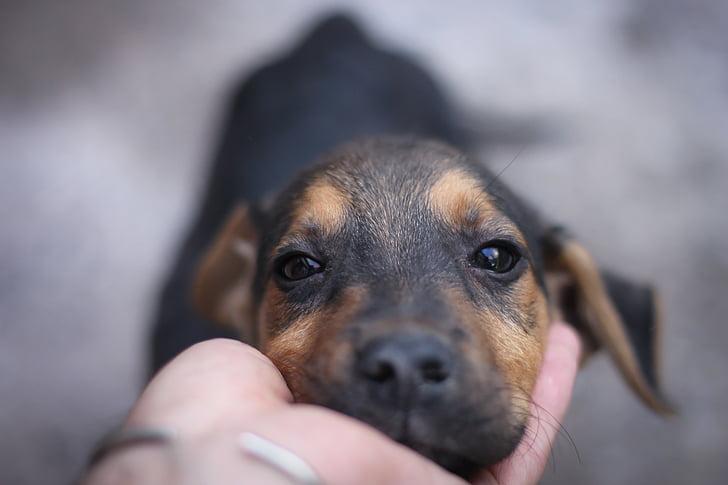dog, pet, animal, animals, look, puppy, pets