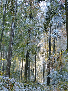 winter, forest, wintry, trees, snow, snowy, nature