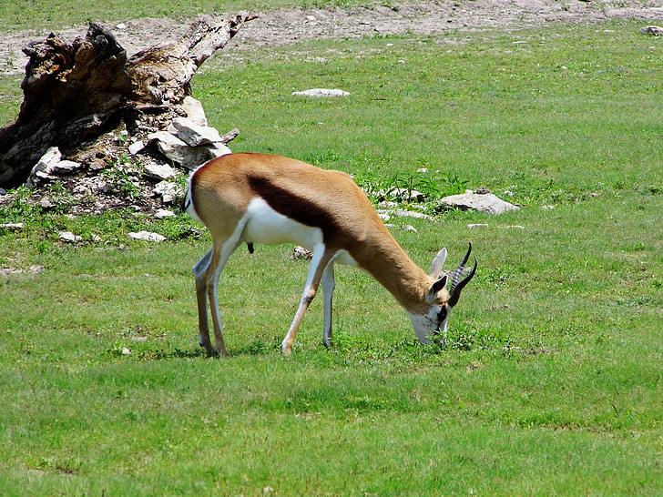 kansas city zoo, zoo, animals, wildlife, nature, african, africa