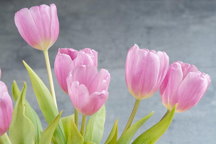 tulpės, gėlės, rožinė, Pavasario gėlės rožinės spalvos, Pavasario gėlės, skintos gėlės, uždaryti