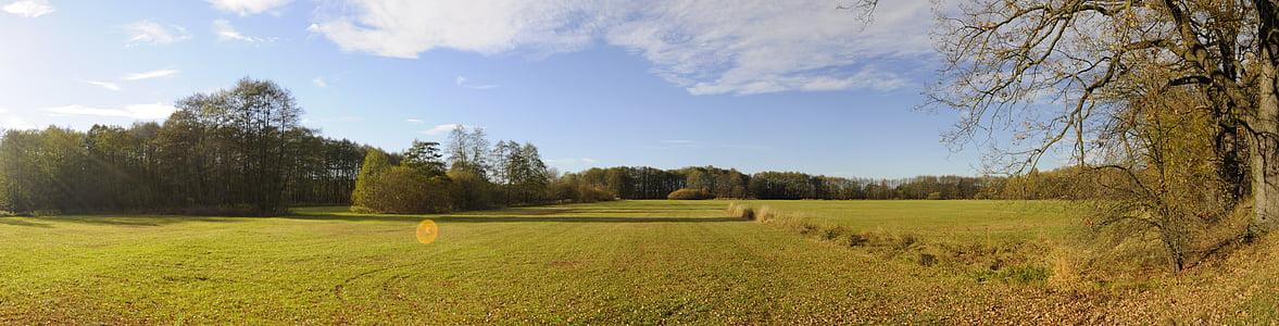 field, trees, sun, nature