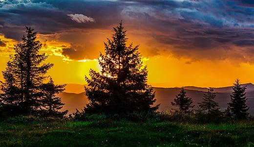 günbatımı, ağaç, doğa, Güneş, ufuk, gökyüzü, Ray