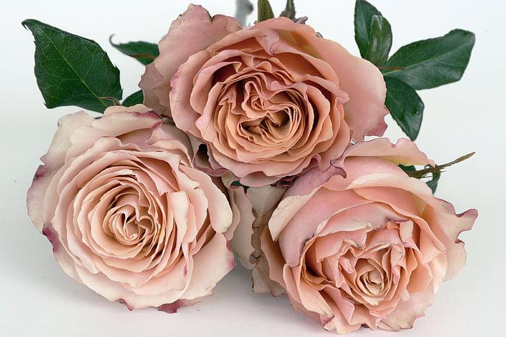 roosid, lõhe, roosa õitega, lill, romantiline, Armastus, aroom