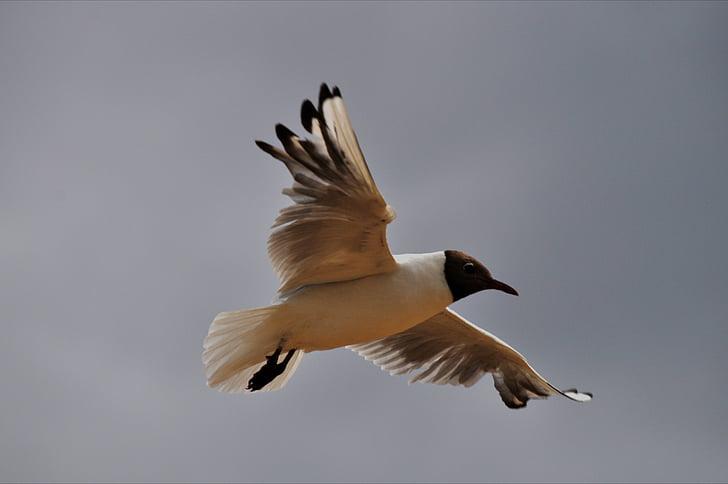 uccelli, i gabbiani, natura, uccelli acquatici