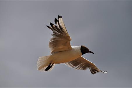 ocells, les gavines, natura, aus aquàtiques