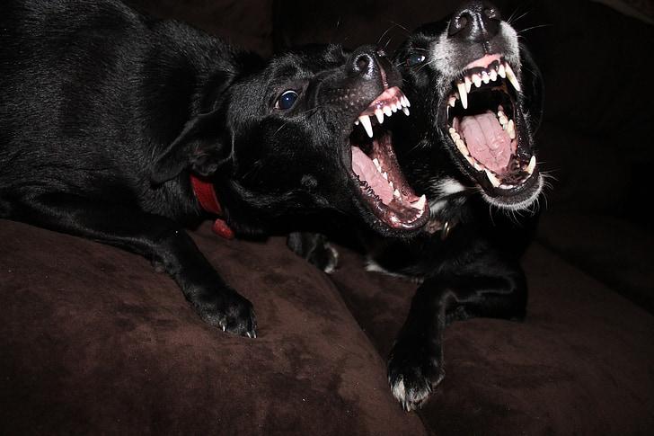 divertit, gossos, animals, humor de gossos, animal de companyia, divertits animals, gos