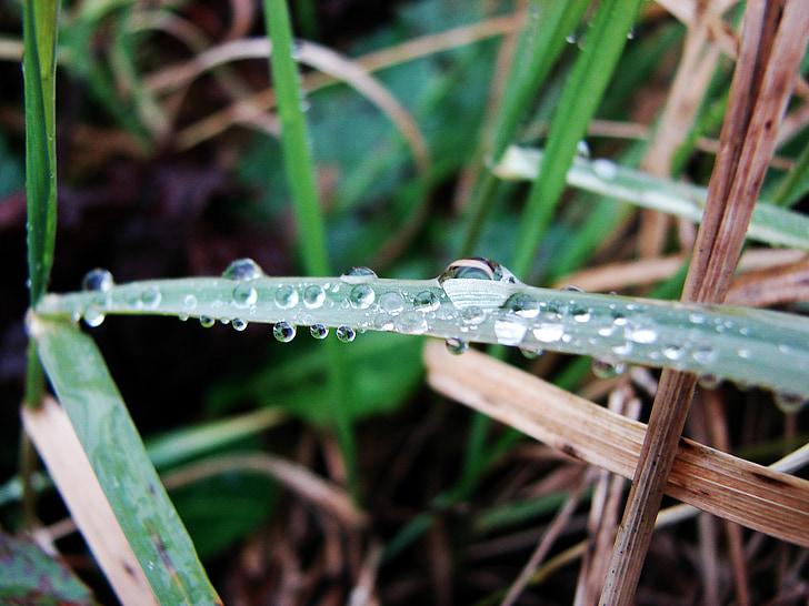 vlhkosť, tráva, Príroda, vody, jar, kvapka vody, kvapôčky