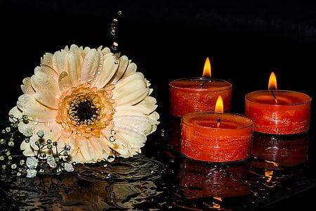 gerbera, gypsophila, candles, candlelight, flame, burning candles, light