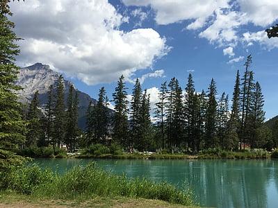 Kanada, puu, River, maisema, Luonto, päivä, ikivihreitä puita