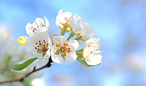 planta, natura, viure, flor, fragilitat, flor, primavera