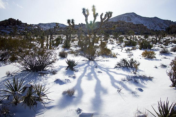Landschaft, landschaftlich reizvolle, Winter, Schnee, Kaktus, Joshua Tree Nationalpark, Kalifornien
