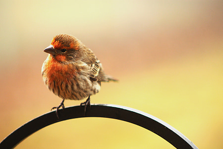 bird, early bird, perched, tilted, curious, orange, avian
