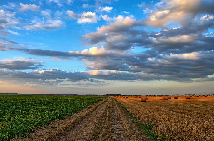 nature, landscape, field, agriculture, cereals, straw, clouds