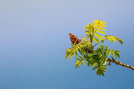 branca d'arbre, primavera, verd, planta, fulla, natura, fulles