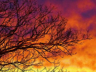 sončni zahod, drevo, veje, nebo, oblaki, na prostem, scensko