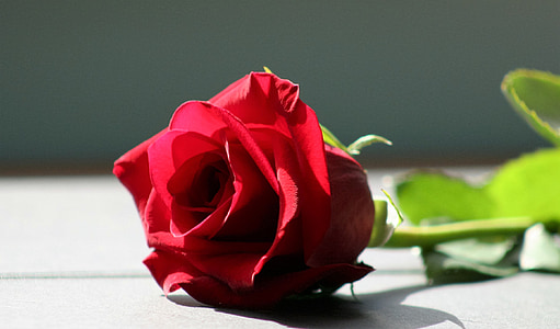 τριαντάφυλλο, κόκκινο τριαντάφυλλο, λουλούδι, κόκκινο, Αγάπη, Ρομαντικές αποδράσεις, τριαντάφυλλο - λουλούδι