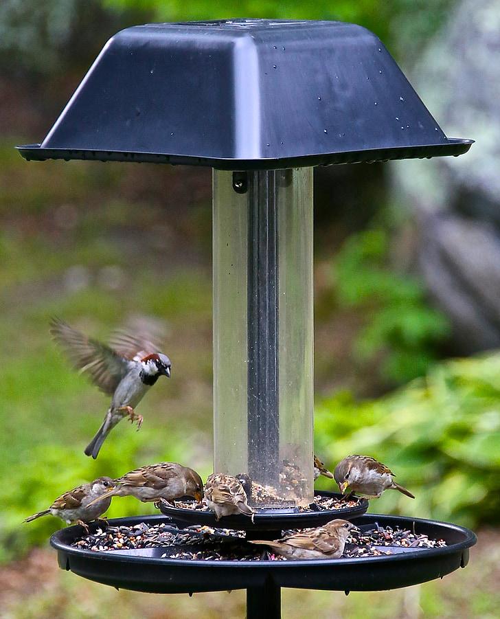 hummingbird, bird, small, flutter, wild, animal