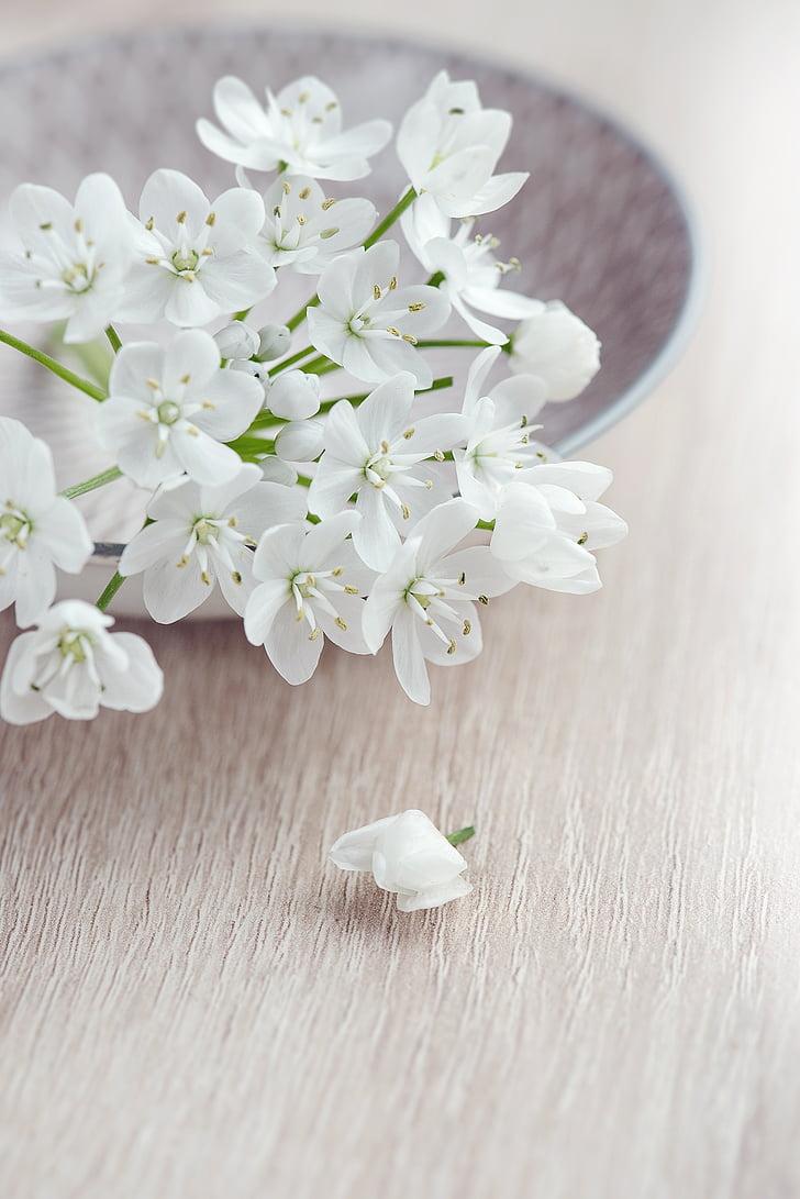 flor, flors, blanc, flors blanques, tendre, romàntic, flor de porro