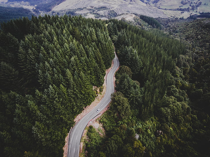 green, trees, plant, nature, forest, road, travel