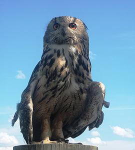 eagle owl, owl, bird, bird of prey, raptor, animal, birds