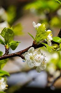 jar, kvety, dážď, zeleno-biela, kvapky