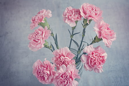 catei, roz, flori, flori roz, flori tăiate, de mai sus, închide