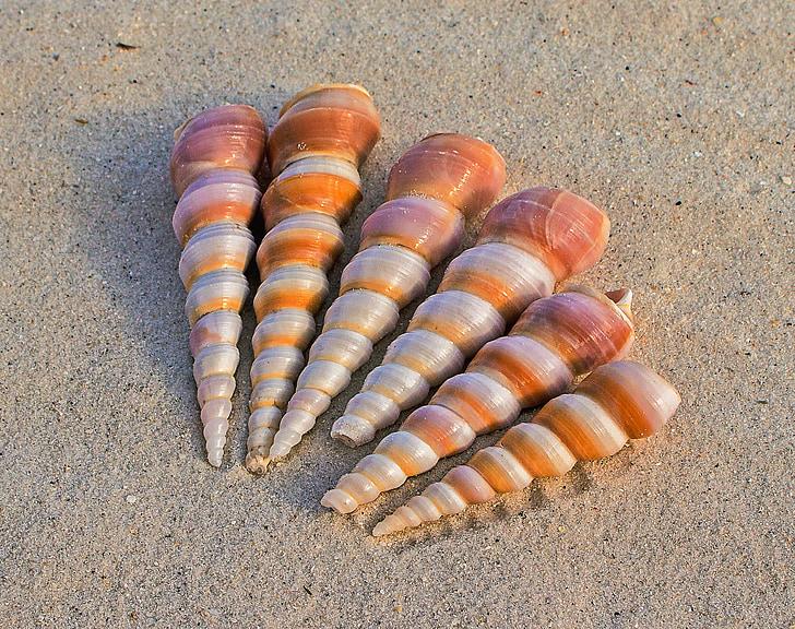 kupola školjke, moru puža, plaža pijesak, marinac, priroda, puževi, plaža