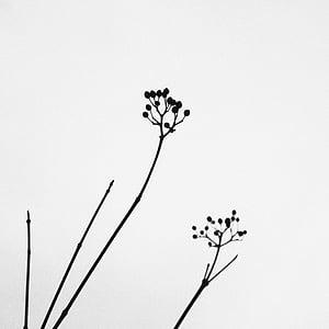 naturaleza, planta, minimalista, negro, blanco, silencio, tranquila, contraste