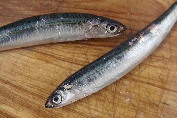 Sardinija, svježe, marinac, riba, Rezanje ploča