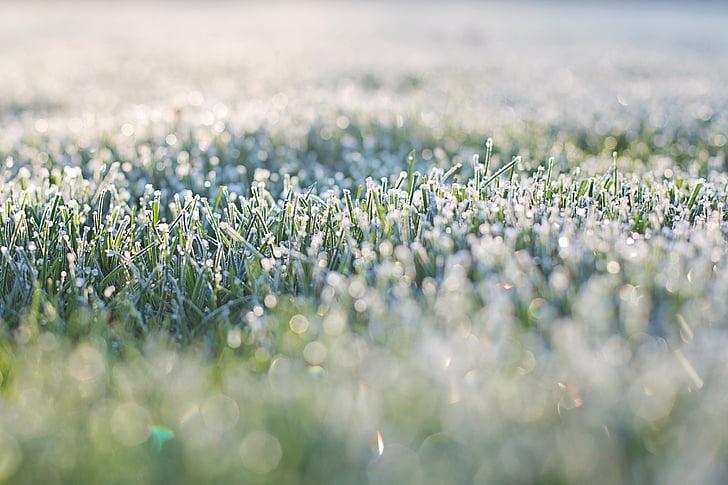 les gelades a la gespa, primera hora del matí, gelades, matí, bokeh gespa, herba, natura