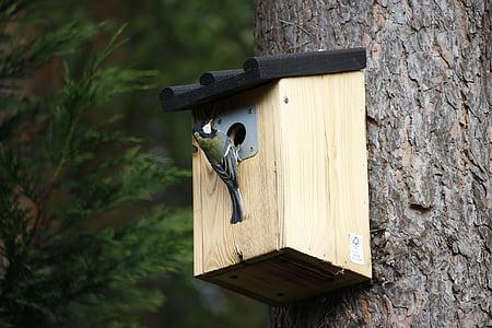 синигер, Птицеферма, емисия, дървен материал, природата, птица, перушина