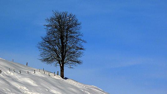 Zimní, sníh, Zimní, bílá, zasněžené, zimní chladné, Zimní sen