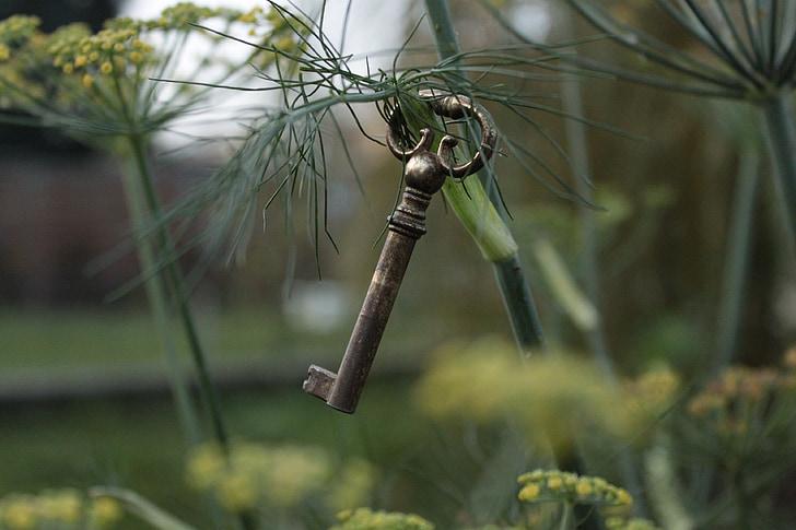moi?, sauvage, jardin, nature, paysages, vert, Zen