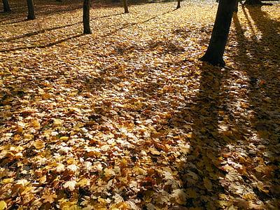 Sonbahar, yaprakları, Altın, Altın sonbahar, sonbahar yaprakları, ortaya, yaprak boyama