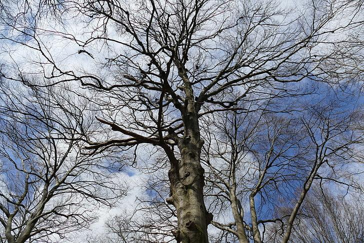 belle image, Beau tir, parfait, humeur, Sky, nuages, arbre