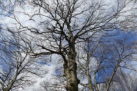 agradable pic, tret bonic, perfecte, estat d'ànim, cel, núvols, arbre