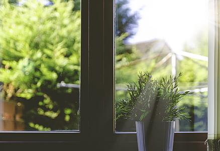 planta, planta, raigs sol, finestra