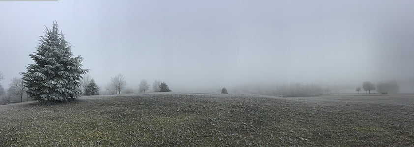 fir, winter, cold, winter landscape, frost, landscape