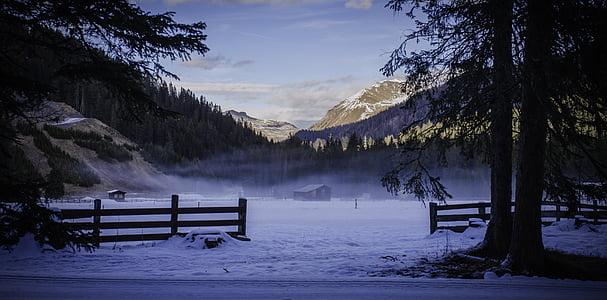glade, fog, atmosphere, winter, forest, tree, weird