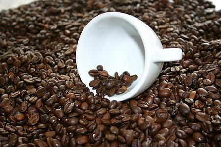 cafè, fesols, grans de cafè, Copa, cafeteria, rostit, cafè verd