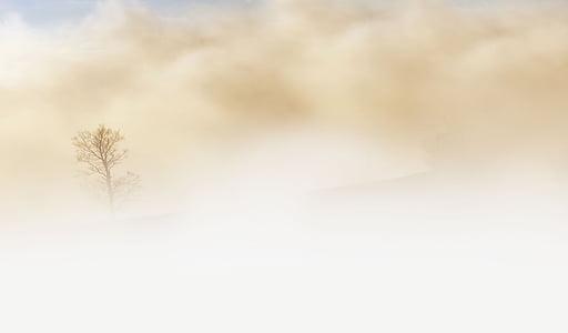 rūkas, medis, dykuma, dangus, žemė, smėlio sp., žiemą