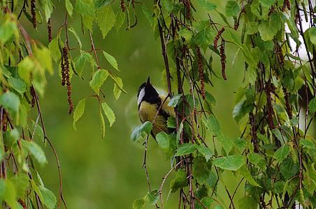 tit, bird, fly, nature, small bird, animal