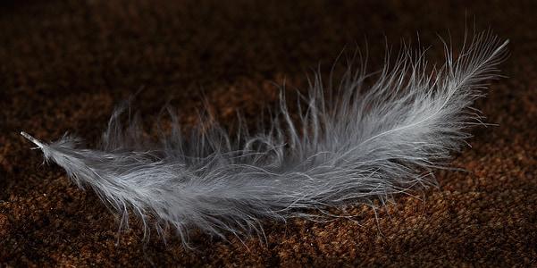 spring, animal springs, bird feather, white, tender, airy, ground