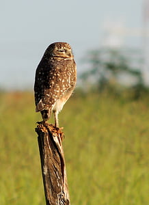 owl, play, birds, bird, watching, bird of prey