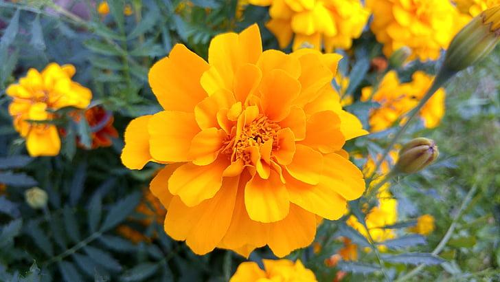 цветок, желтый, Природа, Весна, Лето, желтый цветок, Цветы
