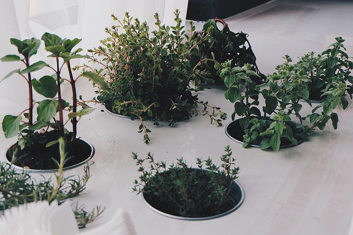 plantes, herbes, natural, verd, fresc, Orgànica, Sa
