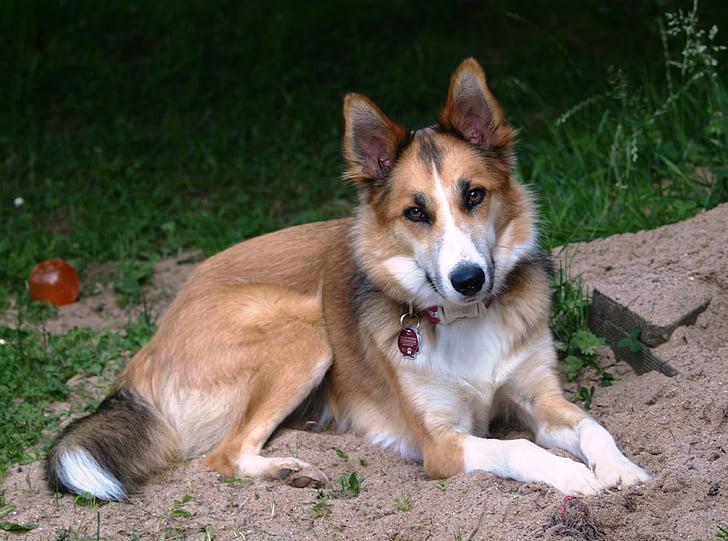 dog, hybrid, pet, concerns, pretty, young dog, fur