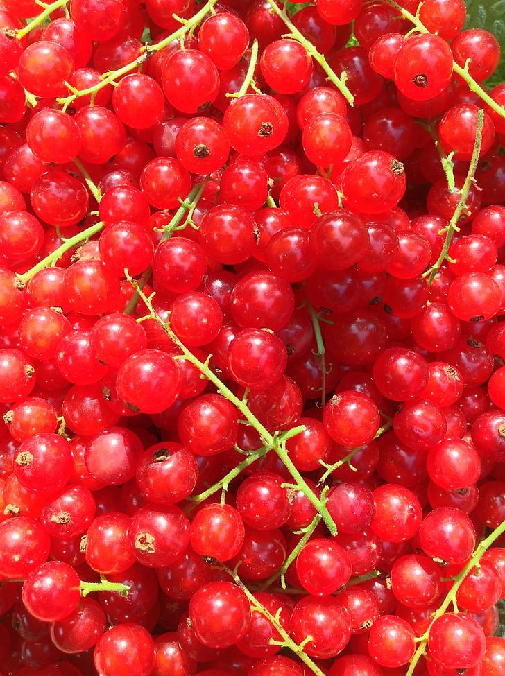 quả phúc bồn tử, màu đỏ, màu xanh lá cây, thu hoạch, Thiên nhiên, Sân vườn, về